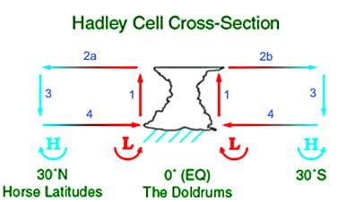Hadley cell cross-section.The Hadley cell is one of three atmospheric circulation cells which transport heat poleward and drive Earth's weather. Created with Photoshop. 2004 D. Windrim