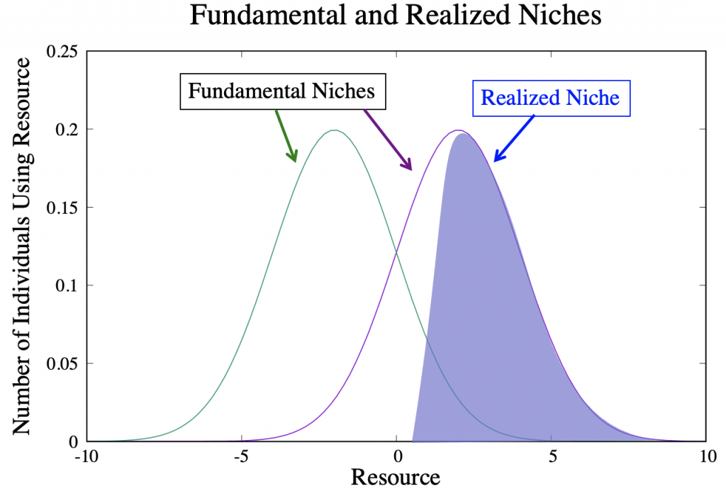 fundamental and realized niches