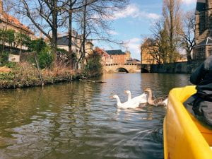 An image of three white ducks to the left of the yellow paddle boat on the river.