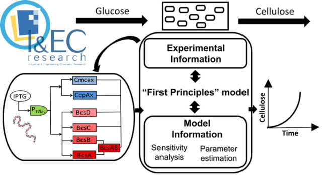 Our Paper was selected by ACS as the Editors' Choice